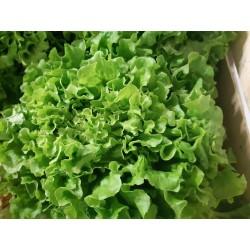 Salade du Sud Ouest 1.20 €