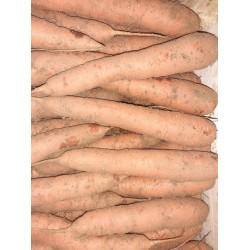 Carottes de Sable 1.49 € / kgs