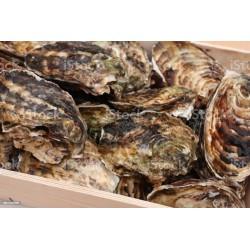 Les 100 huîtres N° 4 fines...